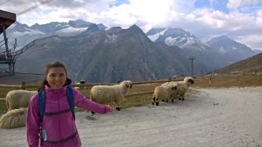 Koyun çetesi&Birgül :)