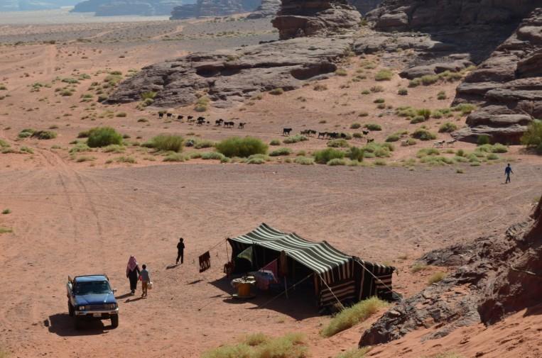 Çölde keçisi ve devesiyle gerçek bir Bedevi kampı