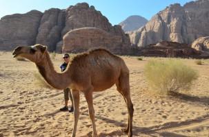 Birgül ve develer-3 :)