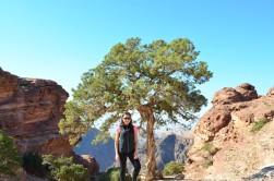 Ağaçlar çöl ortamına bile uyum sağlıyorlar