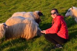 Bol kürklü İzlanda koyunlarını beslerken:)