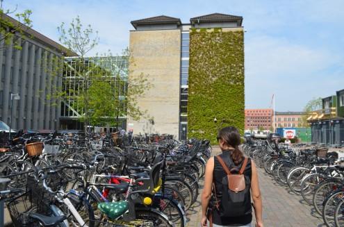 Kopenhag tam bir bisiklet cenneti