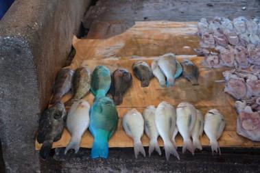 Balık pazarında tezgahlar
