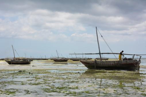 Okyanıs çekildiği için karada kalmış tekneler