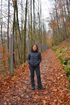 Orman içi yolları sarı yapraklarla kaplanmış