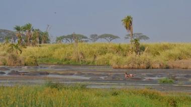 Oldukça büyük bir hippo-pool