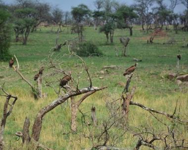 Akbabalar 'yeni bir av çıksa da biz de nasiplensek' diyorlar:)