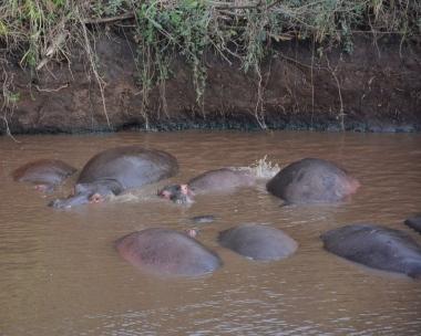 Bir başka hippo-pool