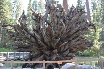Düşmüş bir ağacın altı