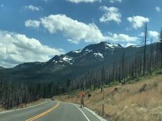California'daki yangınlardan nasibini almış ormanlık alanlar