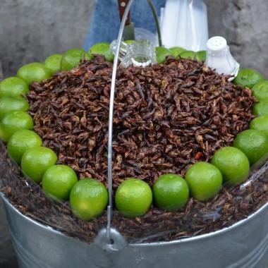 Taze kızarmış böcek